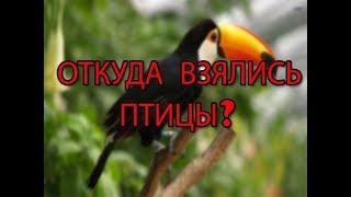 Откуда взялись птицы?