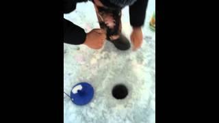Ловля щуки в казахстане сергеевское водохранилище летом