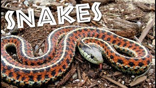 All About Snakes for Kids: Learn about Snakes for Children - FreeSchool