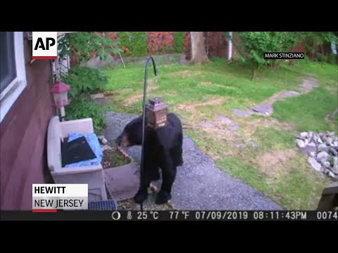 A backyard camera in Hewitt, New Jersey recorded a black bear knocking over a bird feeder and eating the bird food only to be chased away by a fast-moving dog. (July 11)
