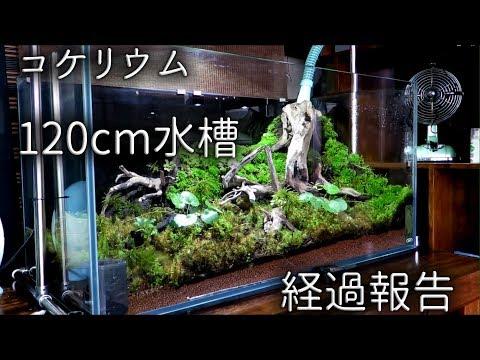苔リウム、120cm水槽の経過