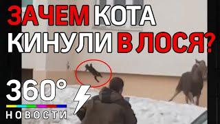 Приключения дикого лося в городе Октябрьском