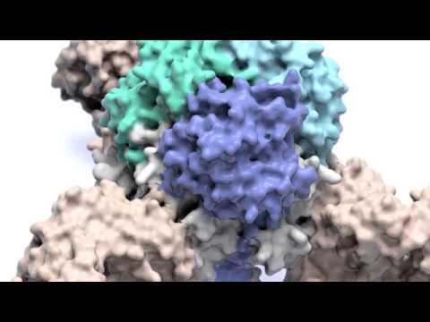 Hpv cervical cancer colposcopy
