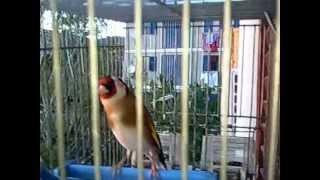 preview picture of video 'chardo twawati de tnia'