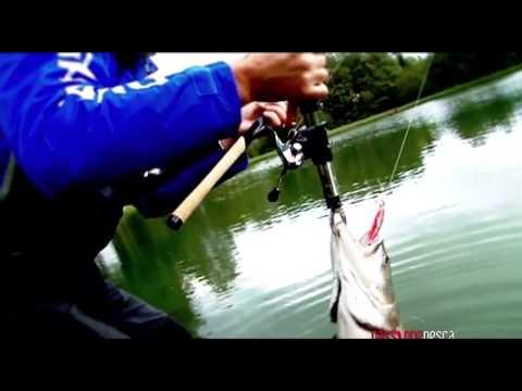 Canna da pesca Shimano Beastmaster CX Spinning
