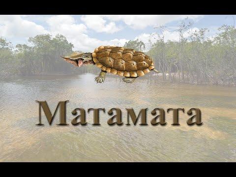Русская Рыбалка 3.99 Матамата
