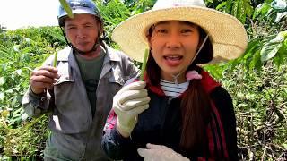 Lần đầu ăn trái Chuối Rừng - Hương vị đồng quê - Bến Tre - Miền Tây