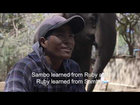 Walking With Giants (2019) - The story of the first elephant sanctuary in Cambodia, told by the locals that helped start it.