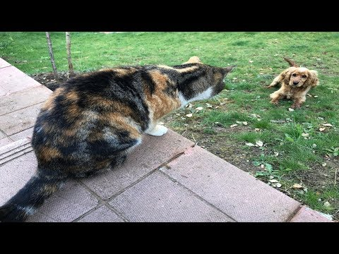 Cats never let the neighbor's dog enter garden