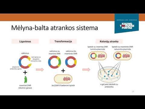 Kas yra dvejetainė opcionų prekybos sistema