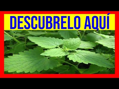Adelgazo en youtube