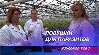 Специалисты регионального Россельхознадзора объявили борьбу паразитам