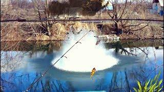 Речная рыбы когда клев начинается