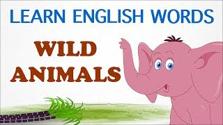 Wild Animals | Pre School | Learn English Words (Spelling) Video For Kids and Toddlers
