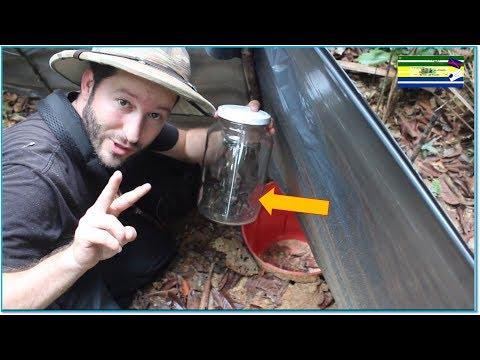 Como fazer a solução de carbonato de sódio mylno de bandejas de um fungo de pregos