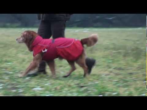 Hurtta Regenjacke Wetterjacke Hunde Regenjacken | HUND-unterwegs.de