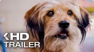 BENJI Teaser Trailer (2018) Netflix | Kholo.pk