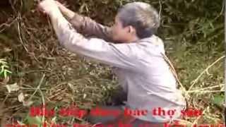 preview picture of video 'Cách săn gà rừng - Sơn La'