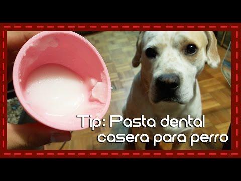 Tip: Pasta dental casera para perro