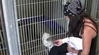 Lancaster Animal Shelter dog visit by Mutt Match L.A.