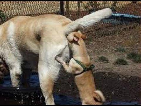 თუ თქვენი ძაღლი ასე იქცევა, უნდა იცოდეთ რატომ