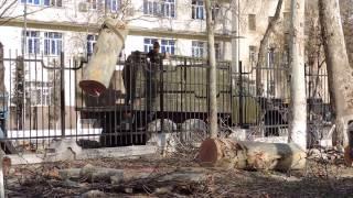 Уничтожение чинар в парке Дружбы народов