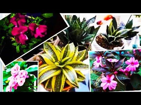 💜100 espécies de #plantas,flores e folhagens que cultivo no meu #jardim-dicas de cultivo!!!!❤😍