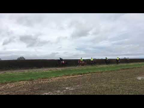Ardad x Love Action 2019 filly on the gallops.