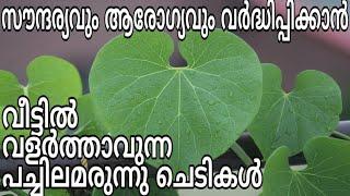 Ayurvedic Herbs For Health And Beauty Jaiva Krishi Tips In Malayalam   Aarogyam Ottamooli Tips