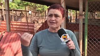 Voluntários promovem ações para ajudar nos custeios das castrações de animais