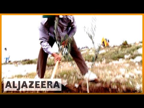 🇵🇸 Land Day: Palestinians protesting the expropriation of their land | Al Jazeera English