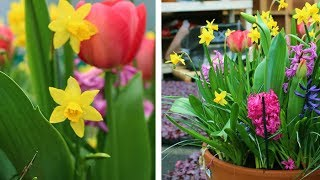 How to Layer Spring Flowering Bulbs (Lasagna Planting): Spring Garden Guide