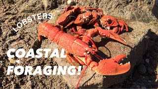COASTAL FORAGING, Lobsters , Velvet Swimming Crabs , Cooking On The Rocks !