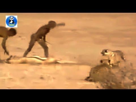 Orang Orang Tangguh Berburu Melawan Harimau