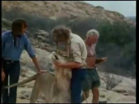 Amazing Story of Christian the Lion - The  Animal Human Bond