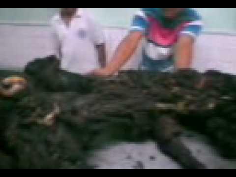 Kapag upang masuri para sa mga worm