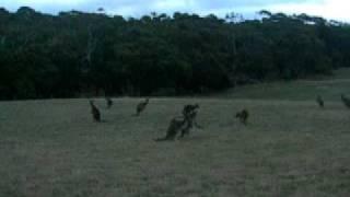 Carpe Diem Education - FANZ semester outback kangaroos kangaroos kangaroos
