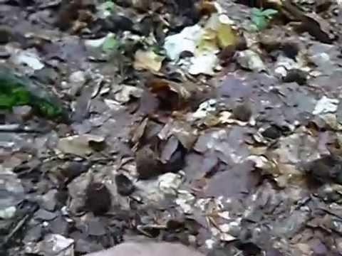 Trattamento di un fungo di unghie il laser in risposte di Krasnodar