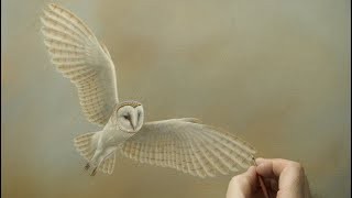 Barn Owl Coming in to Land | My Painting Story
