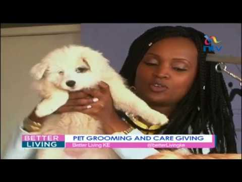 Learning the personalized approach to pet care at Pets Paradise