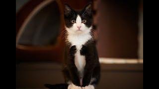 Ваську, черно-белого маленького котёнка, спасла моя бабушка, баба Шура. Она отбила его у ястреба…