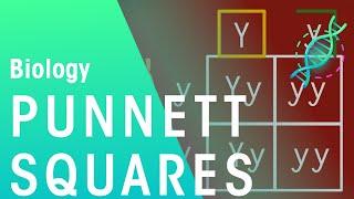 Punnett Squares | Genetics | Biology | FuseSchool