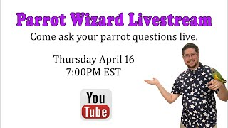 Parrot Wizard Livestream - April 16, 2020