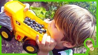 Trucks Picking Blueberries!