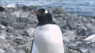 Чудеса голубой планеты - Антарктика