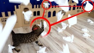 2 Cats VS 100 Ghosts. Epic Battle. Who wins?