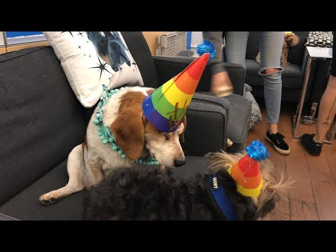 LIVE: We're celebrating this sweet boy's 9th birthday!!   The Dodo LIVE