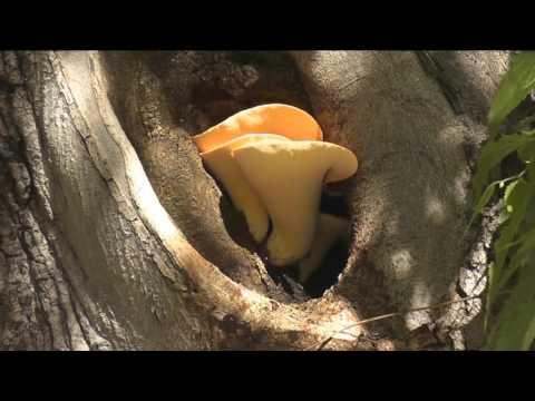 Come trattare un fungo di dito del piede