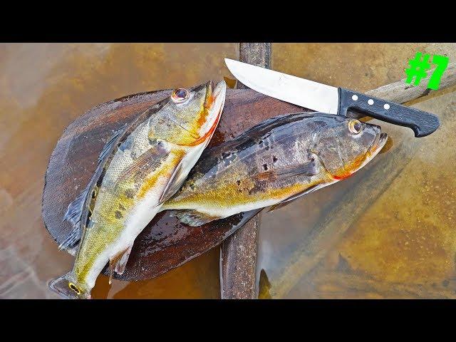 Rainforest Catch n Cook -- Tropical Peacock Bass