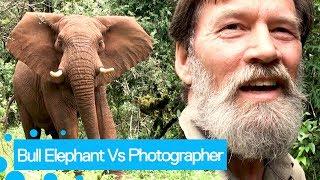 animale intalnire cu un elefant fioros